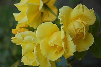 Blaa Garden juni 2008 og juli 031