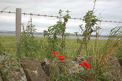 Durham og Lindisfarne 2008 119