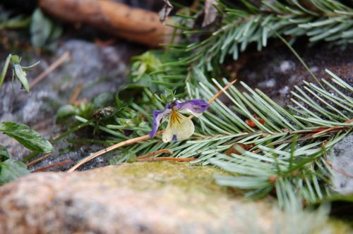 Blue Garden 053