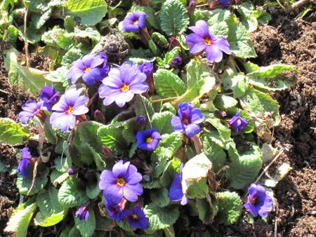 Blue Garden 090