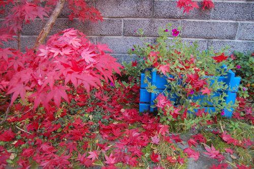 Garden septrember 2007 089