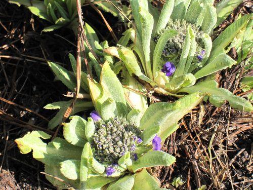 Blue Garden 078