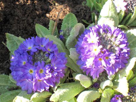 Blue Garden 087