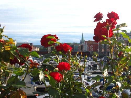 Trondheim 345