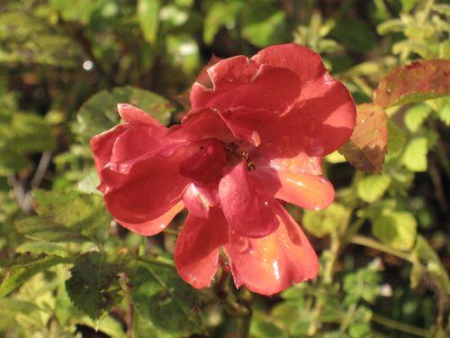 Høst 2009 143