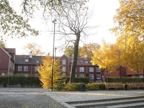 Trondheim 599