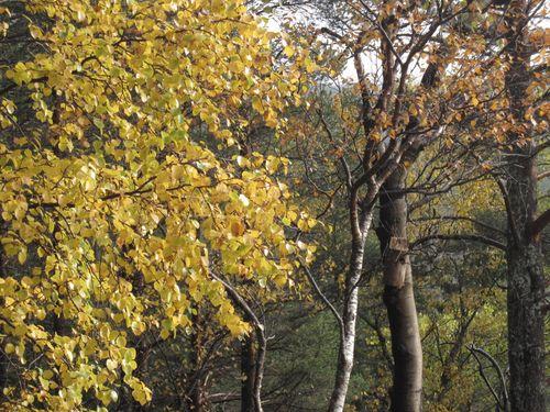 Høst 2009 130