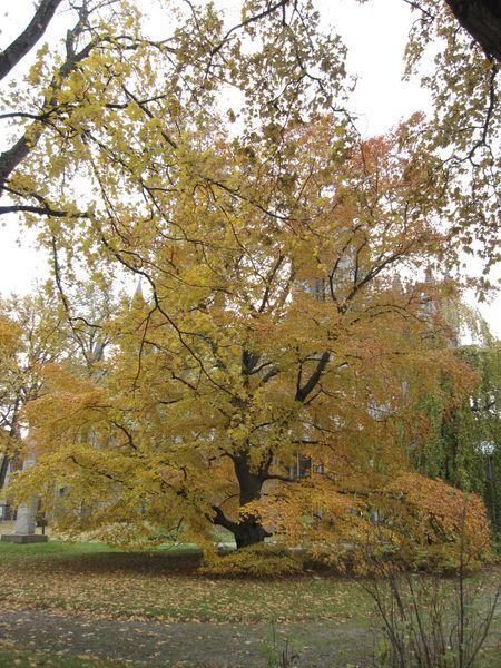 Høst 2009 197