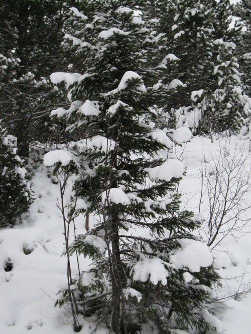 Vinter 2010 010
