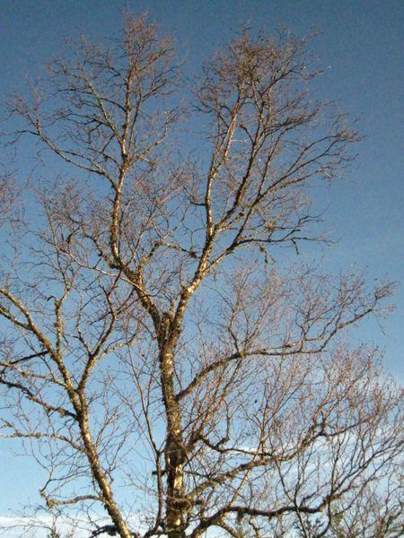 Høst 2009 221