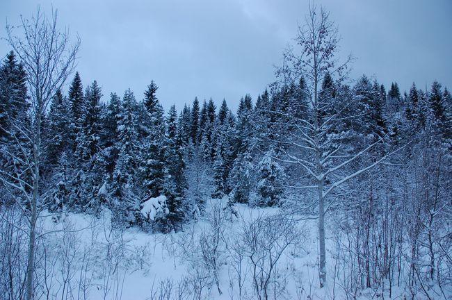 Vinter 2010 018