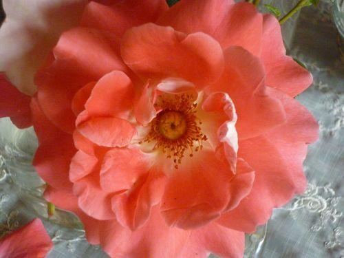 Høst 2010 004
