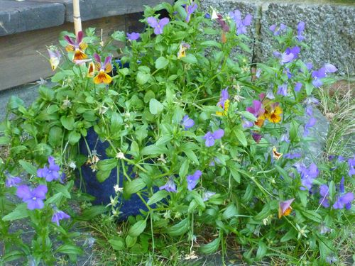 Blue Garden 003