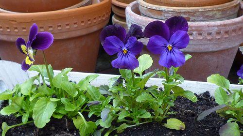 Blue Garden 272