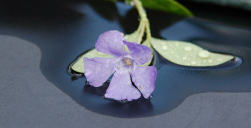 Blue Garden 319
