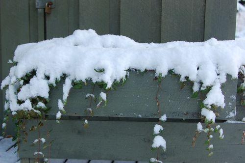 Vinter 2010 2011 032
