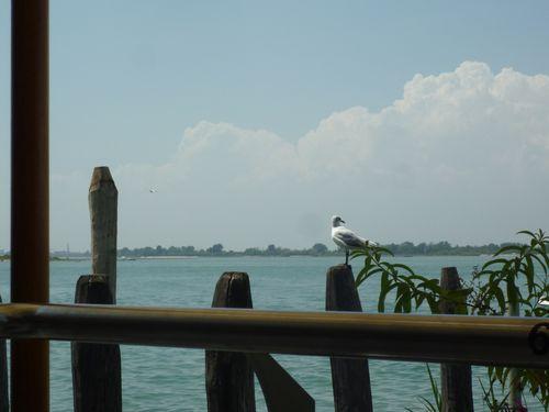 Venezia juli 2011 080