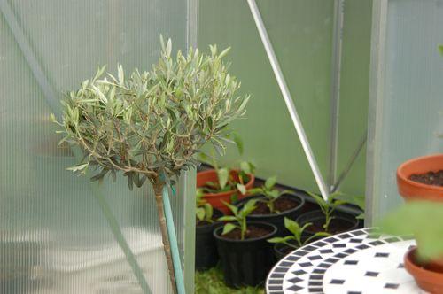 Blue Garden 2011 068