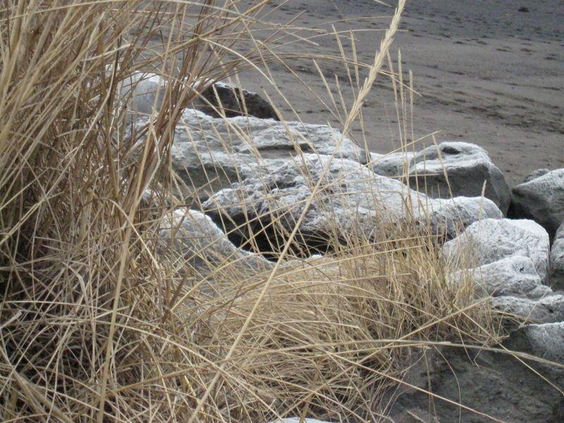Island januar 2010 282