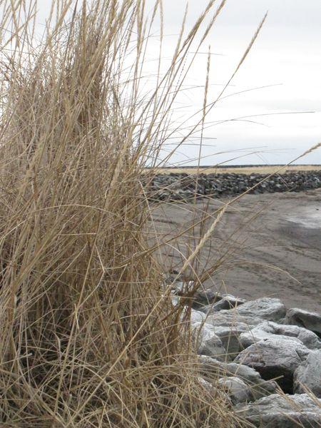 Island januar 2010 281
