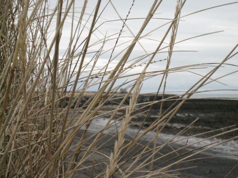 Island januar 2010 286