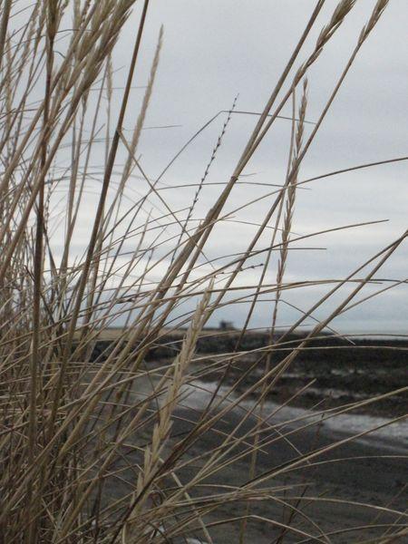 Island januar 2010 285