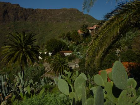 Tenerife jan 2011 091