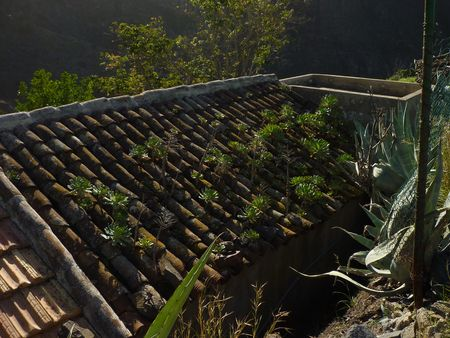 Tenerife jan 2011 085