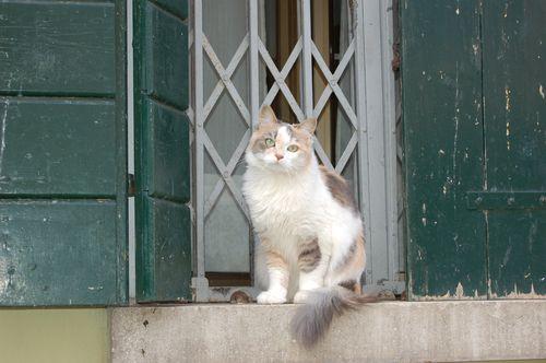 Venezia april 2007 158