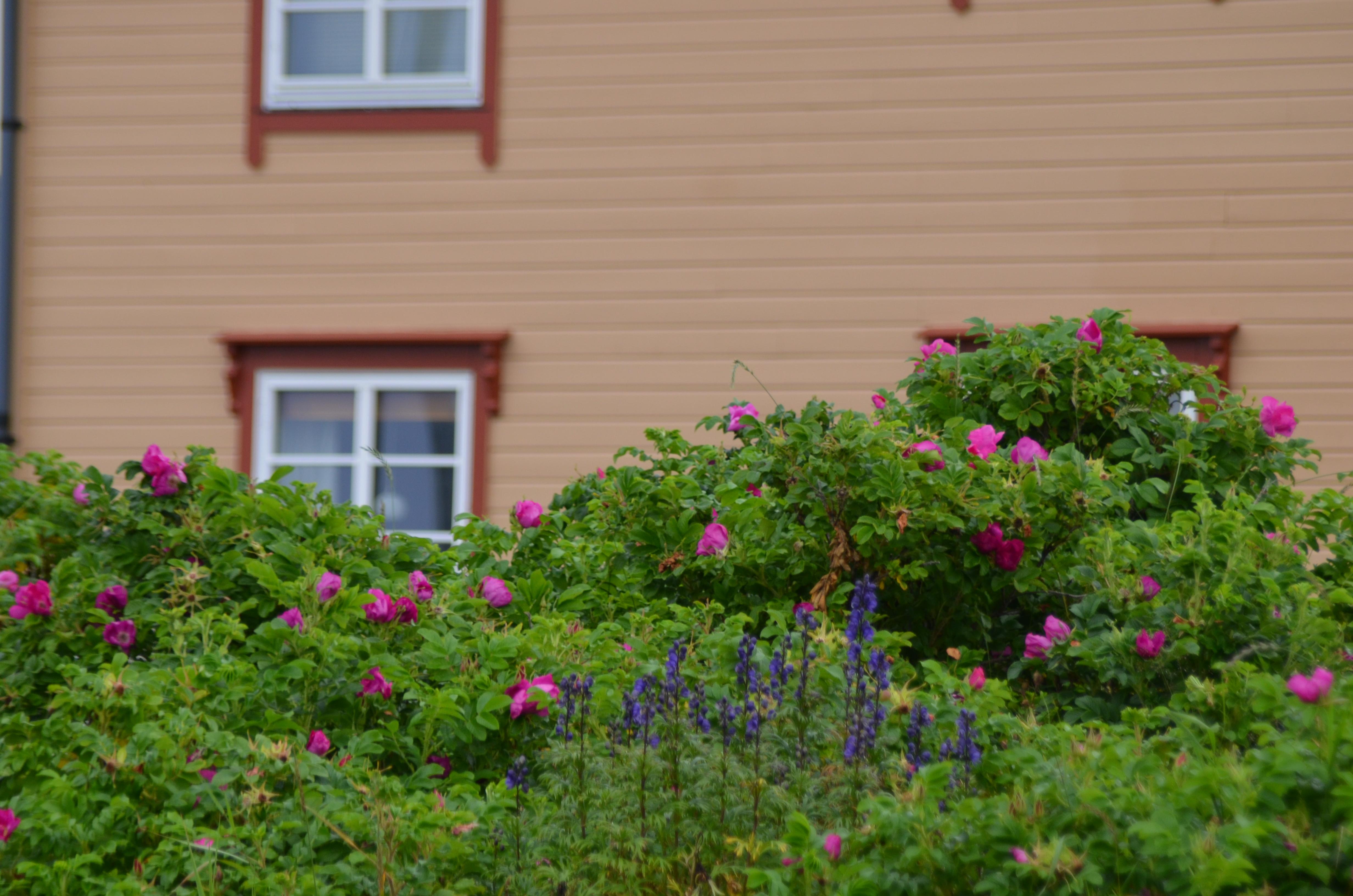 Britt Arnhild S House In The Woods Gardening On The Edge