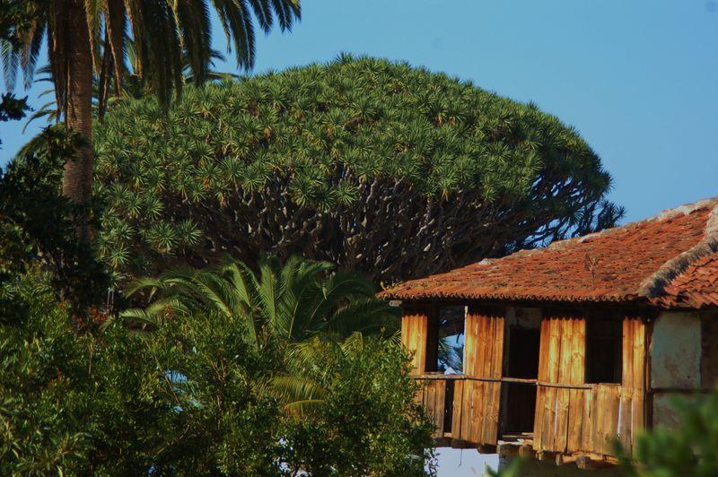 Tenerife jan 2011 030