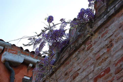 Venezia april 2007 - 2 039