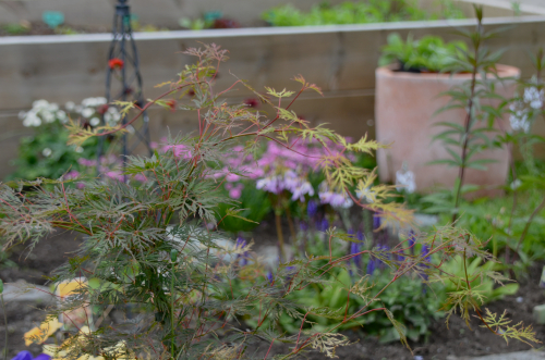 Landscape Gardening Apprenticeships : Britt arnhild s house in the woods to be my own garden