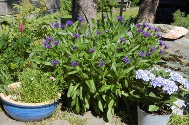 Blue_garden