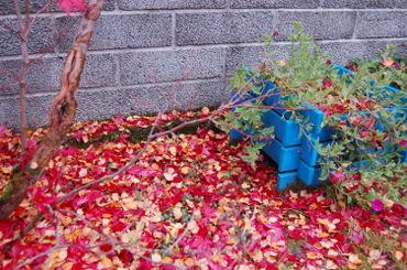 Blue_garden_oct_2007_014