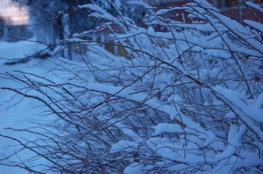 Blue_winter