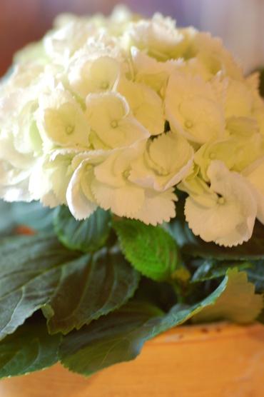 Blog_januar_2008_033