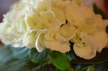 Blog_januar_2008_034