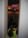 Amsterdam_mars_2005_027